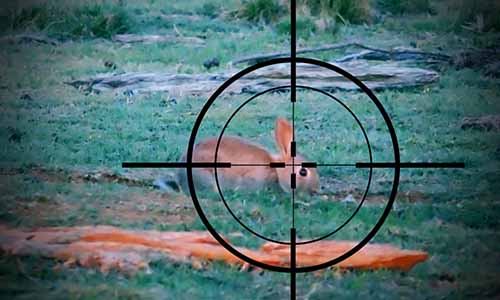 Barnett crossbow scope sighting in on a rabbit