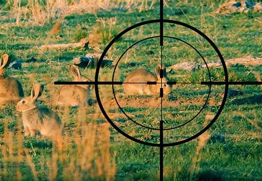 rabbit hunting scope and rifle for survival and pest control
