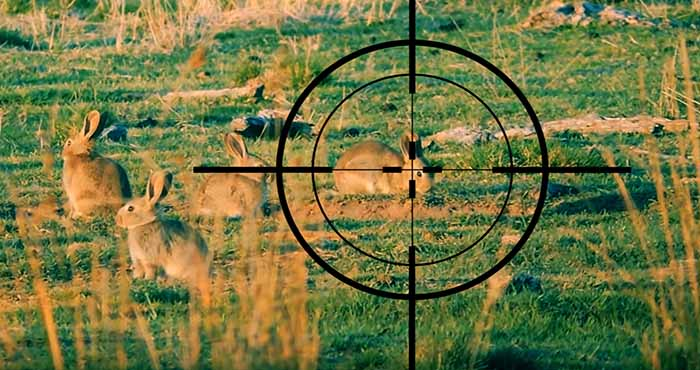 5 Rabbit Hunting Tips for Survival and Pest Control